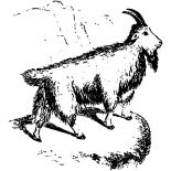 Mountain Goat, Fluffy Mountain Goat Coloring Pages: Fluffy Mountain Goat Coloring Pages