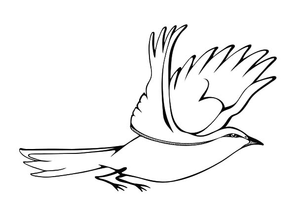 Mockingbird, : Flying Mockingbird Coloring Pages