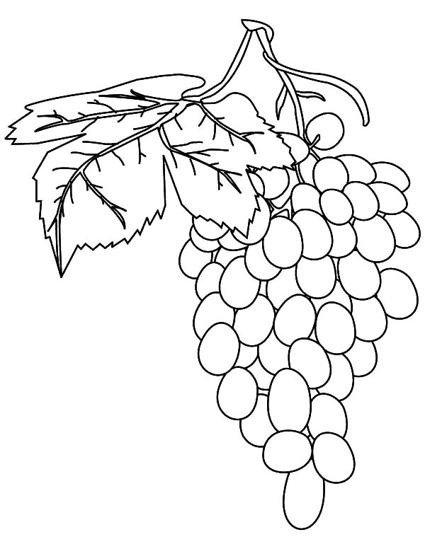 Grapes, : Fresh Fruit Grapes Coloring Pages