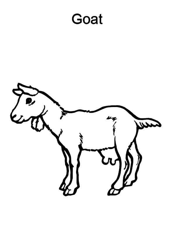 Goat, : G is for Goat Coloring Pages