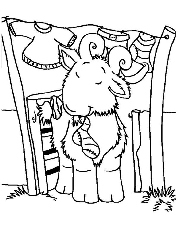 Goat, : Goat Chewing a Sock Coloring Pages