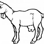 Goat, Goat Coloring Pages: Goat Coloring Pages