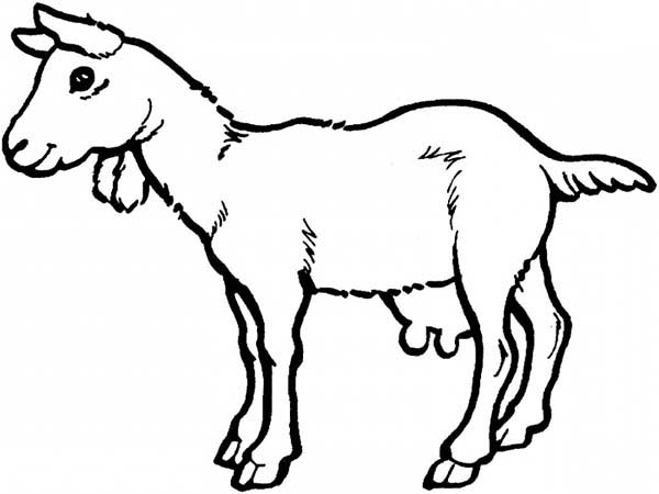 Goat, : Goat Coloring Pages