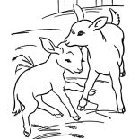 Goat, Goat Couple Coloring Pages: Goat Couple Coloring Pages