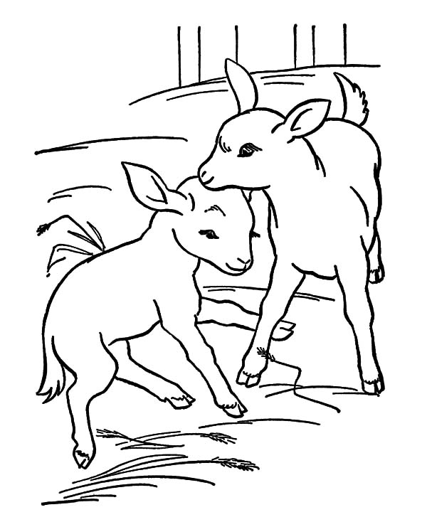 Goat, : Goat Couple Coloring Pages