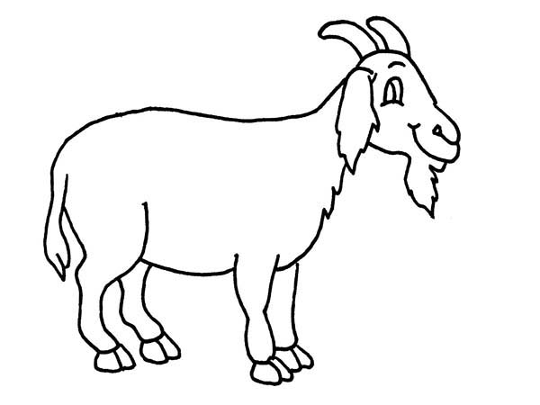 Goat, : Goat Has Long Beard Coloring Pages