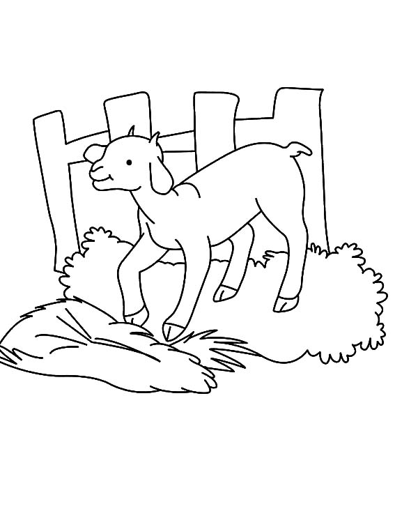 Goat, : Goat Stepping on Grass Coloring Pages