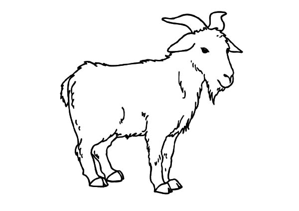 Goat, Goat Is Standing Coloring Pages: Goat is Standing Coloring Pages