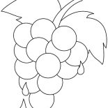 Grapes, Grapes Extract Coloring Pages: Grapes Extract Coloring Pages