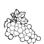 Grapes, Grapes Plantation Coloring Pages: Grapes Plantation Coloring Pages