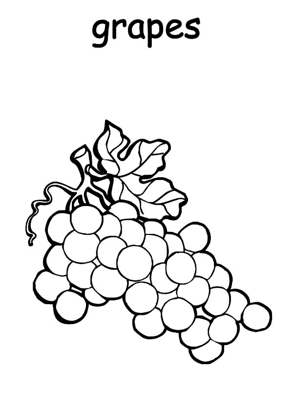 Grapes, : Grapes Plantation Coloring Pages