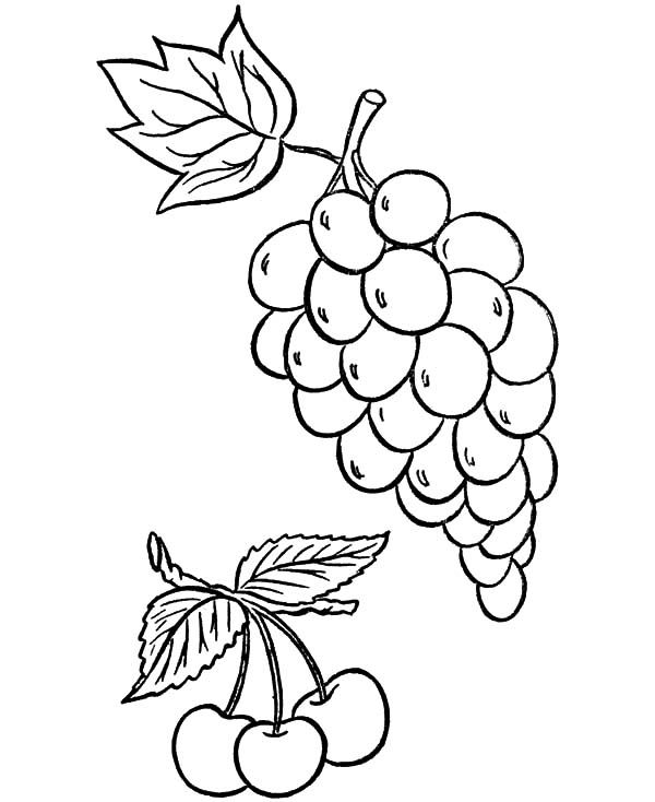 Grapes And Cerry Coloring Pages Color Luna