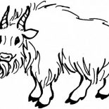 Goat, Hairy Mountain Goat Coloring Pages: Hairy Mountain Goat Coloring Pages