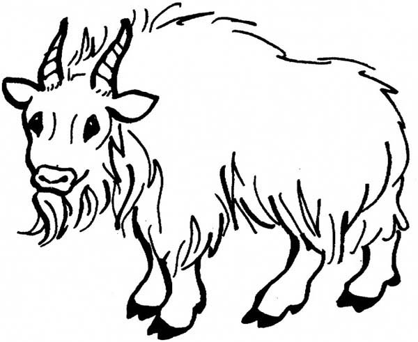 Goat, : Hairy Mountain Goat Coloring Pages