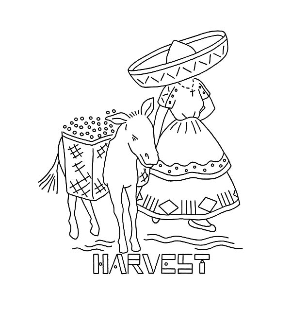 Mexican Donkey, : Harvesting Fruit with Mexican Donkey Coloring Pages
