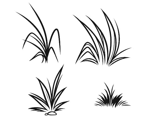 Grass, : How to Draw Grass Coloring Pages