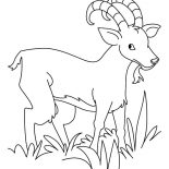 Grass, Hungry Goat Eating Grass Coloring Pages: Hungry Goat Eating Grass Coloring Pages