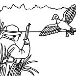 Mallard Duck, Hunting For Mallard Duck Coloring Pages: Hunting for Mallard Duck Coloring Pages