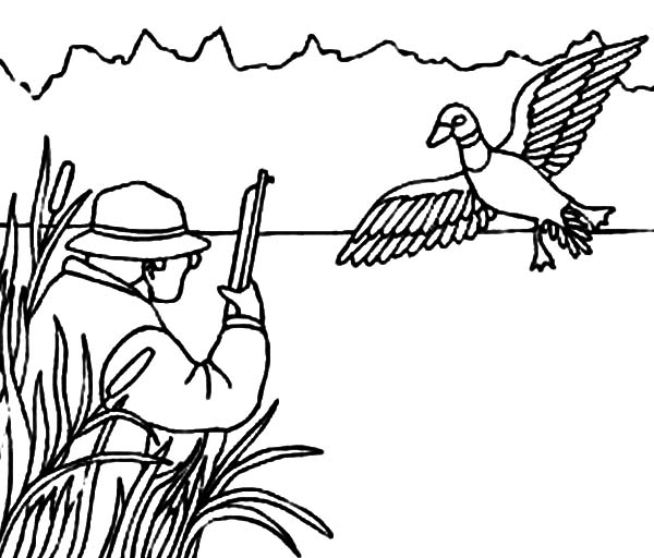 Mallard Duck, : Hunting for Mallard Duck Coloring Pages