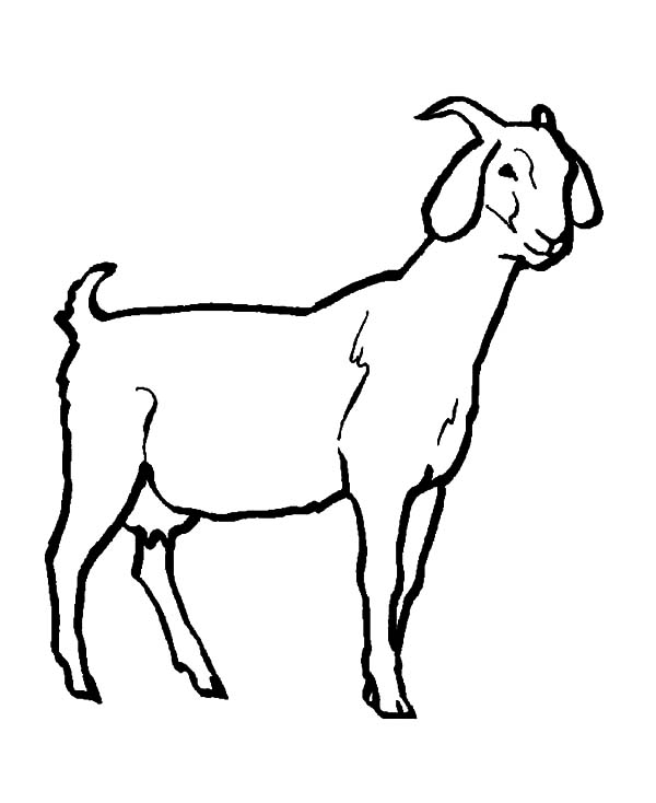 Goat, : Livestock Goat Coloring Pages