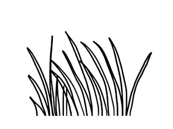 Grass, : Long Grass Coloring Pages