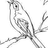 Mockingbird, Black Bird Coloring Page: black_bird