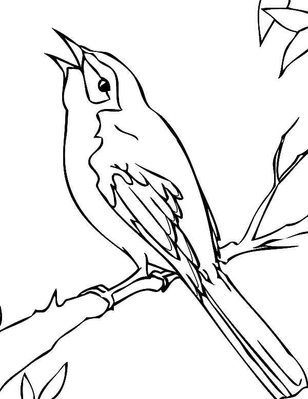 Mockingbird Cleaning His Leg Coloring Pages Black Bird