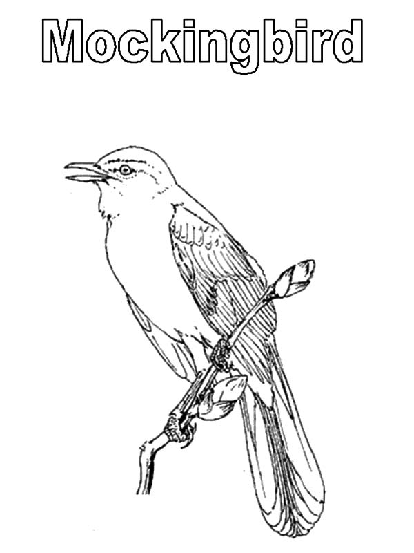 Mockingbird, : M is for Mockingbird Coloring Pages