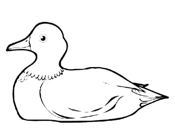 Mallard Duck, : Mallard Duck Gnome Coloring Pages