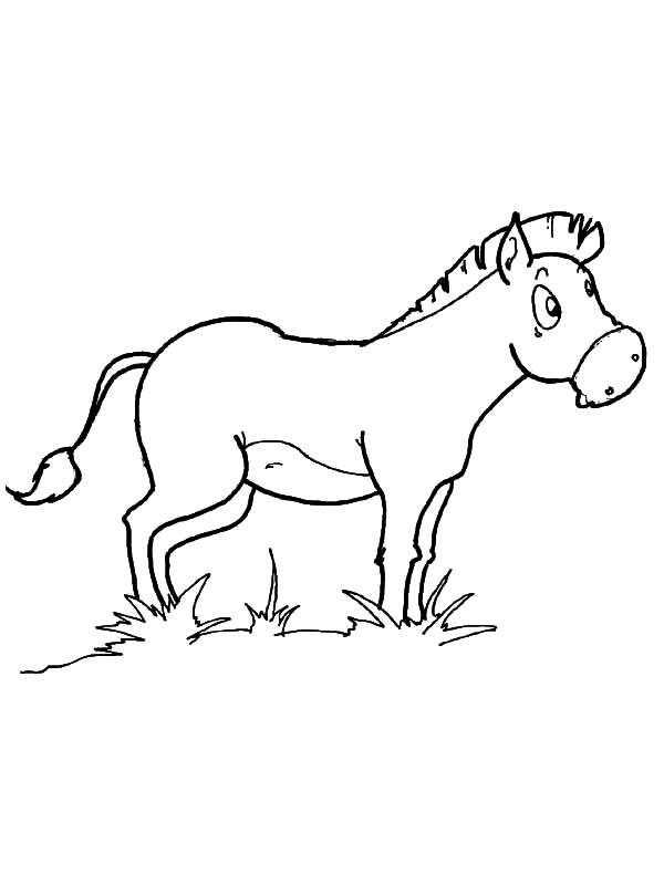 Mexican Donkey, : Mexican Donkey Eating Grass Coloring Pages