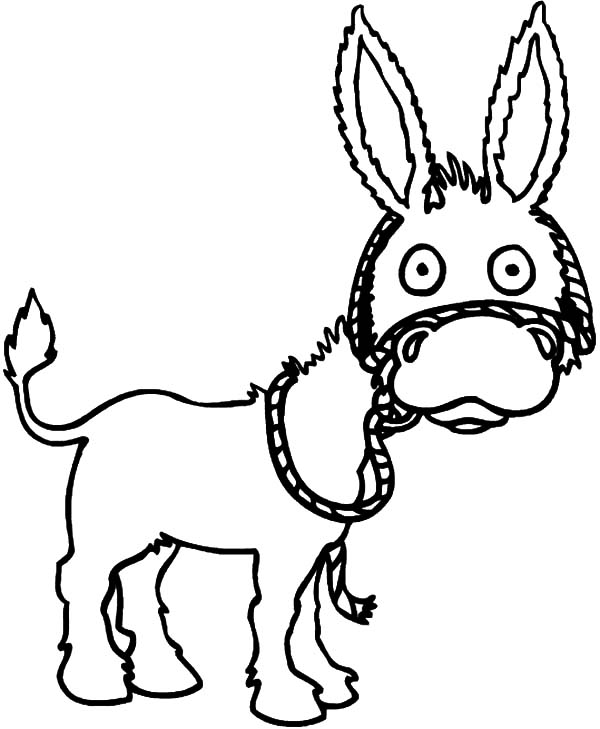 Mexican Donkey, : Mexican Donkey is Surprised Coloring Pages
