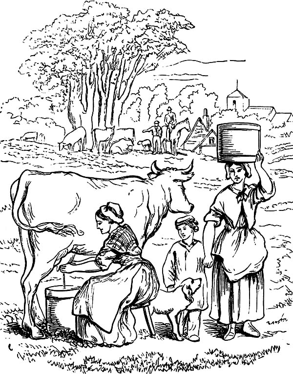 Milking Cow, : Milking Cow Activity Coloring Pages