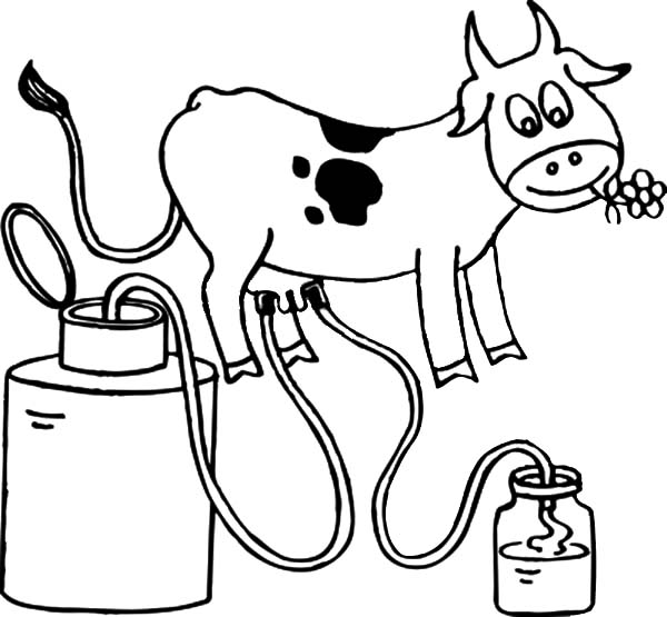 Milking Cow, : Milking Cow Coloring Pages