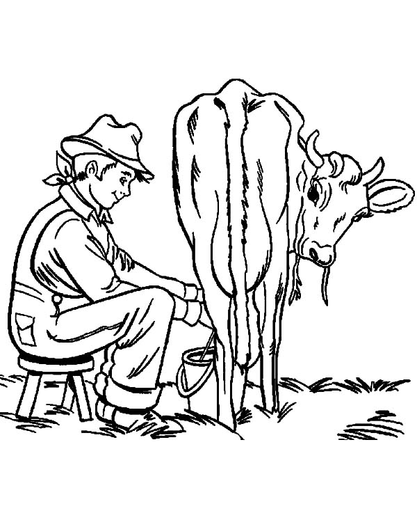 Milking Cow, : Milking Cow Farming Activity Coloring Pages