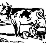 Milking Cow, 608 03469915 Coloring Page: 608-03469915