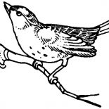 Mockingbird, Mockingbird Begin To Fly Coloring Pages: Mockingbird Begin to Fly Coloring Pages