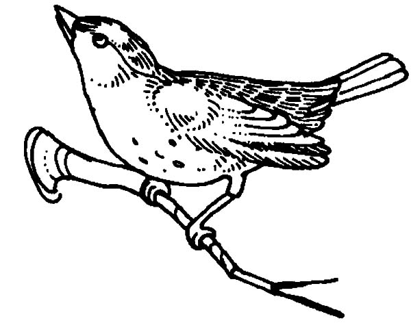 Mockingbird Begin To Fly Coloring Pages