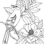 Mockingbird, Mockingbird Calling For Her Mate Coloring Pages: Mockingbird Calling for Her Mate Coloring Pages