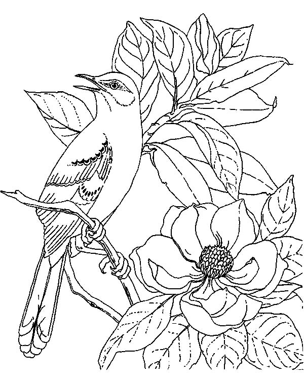Mockingbird, : Mockingbird Calling for Her Mate Coloring Pages