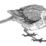 Mockingbird, Mockingbird Cleaning His Leg Coloring Pages: Mockingbird Cleaning His Leg Coloring Pages