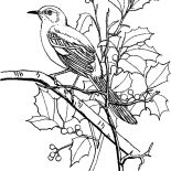 Mockingbird, Mockingbird Coloring Pages For Kids: Mockingbird Coloring Pages for Kids