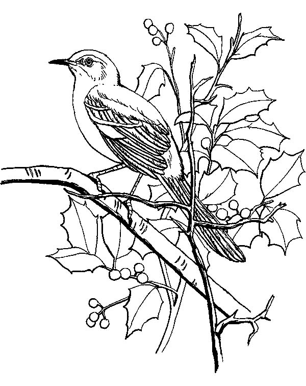 Mockingbird Coloring Pages For Kids
