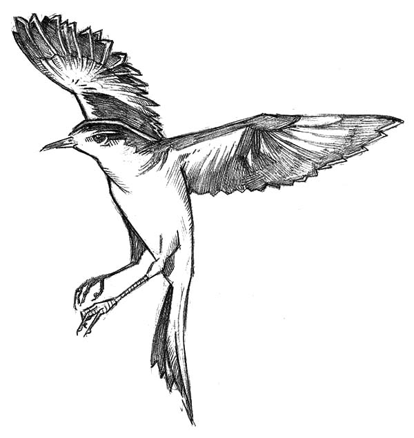 Mockingbird Floating In The Air Coloring Pages