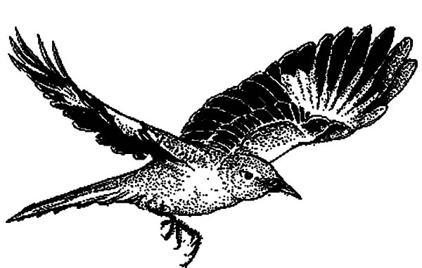 Mockingbird, : Mockingbird Flying Coloring Pages