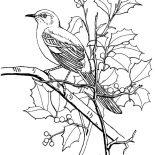 Mockingbird, Mockingbird Looking For Seed Coloring Pages: Mockingbird Looking for Seed Coloring Pages