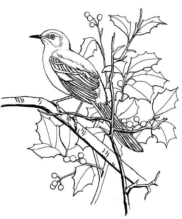 Mockingbird, : Mockingbird Looking for Seed Coloring Pages