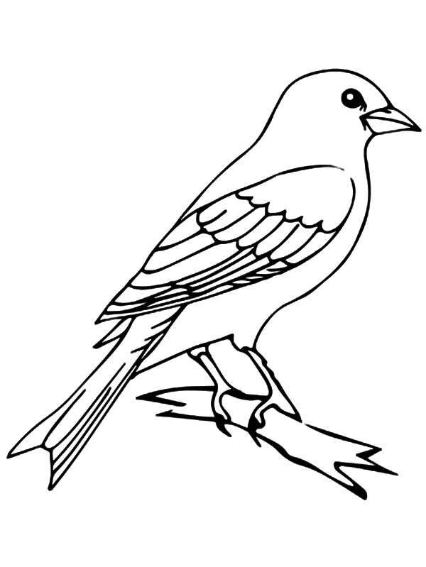 Mockingbird, : Mockingbird Outline Coloring Pages