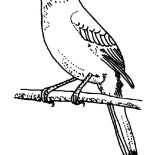 Mockingbird, Mockingbird Perch On Tree Branch Coloring Pages: Mockingbird Perch on Tree Branch Coloring Pages