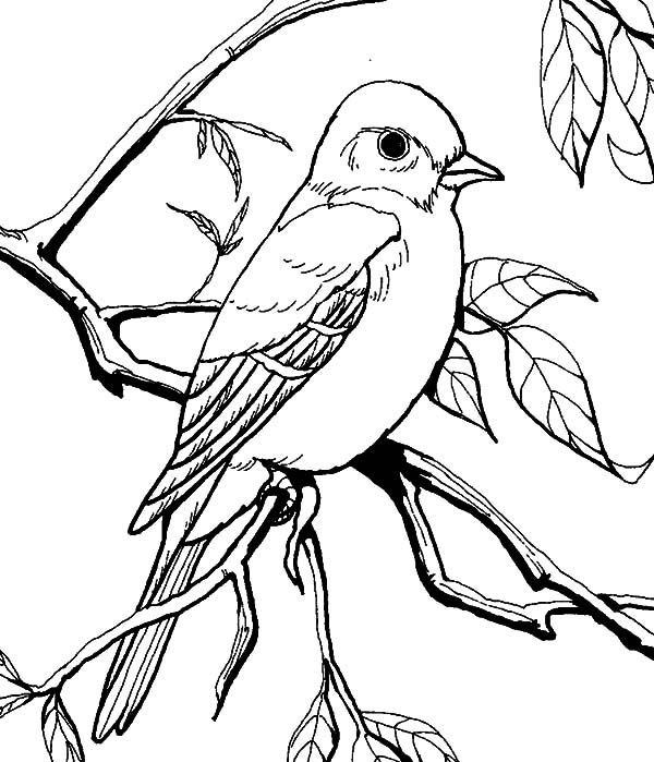 Mockingbird Staring Eye Coloring Pages