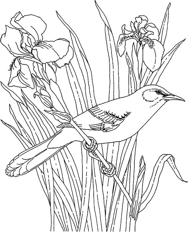 Mockingbird, : Mockingbird and Beautiful Orchid Coloring Pages